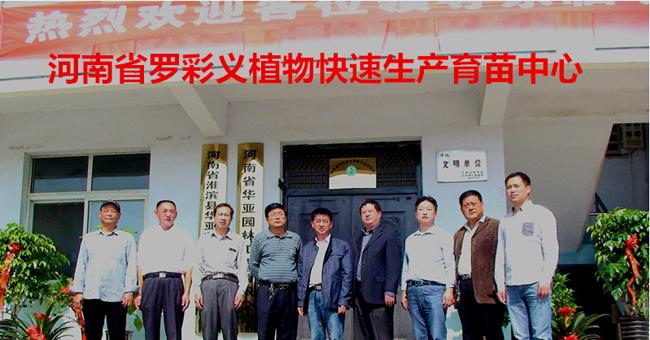 河南省罗彩义植物快速育苗产品中心
